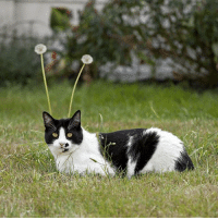 Cat, Grass, and The: PsBattle: Cat In The Grass With Dandelions