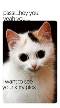 Memes, 🤖, and Pics: pssst..hey you.  I want to see  your kitty pics
