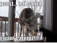 Memes, 🤖, and  Can Has: pssst tell Santa  I want CatllIDZ!  CAN HAS CHEEZEURGER.COM Lol ~BG~