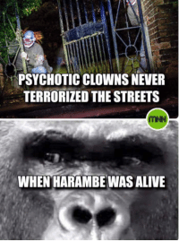 IT'S TRUE!: PSYCHOTIC CLOWNS NEVER  TERRORIZED THE STREETS  WHEN HARAMBE WAS ALIVE IT'S TRUE!