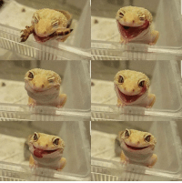 Memes, 🤖, and Worm: Psychotic gecko murders helpless worm.