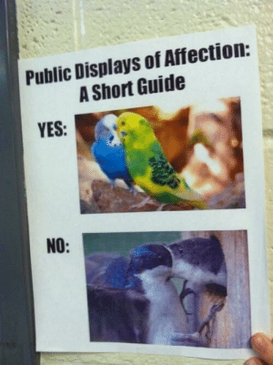 An important guide to pda: Public Displays of Affection:  A Short Guide  YES:  NO: An important guide to pda