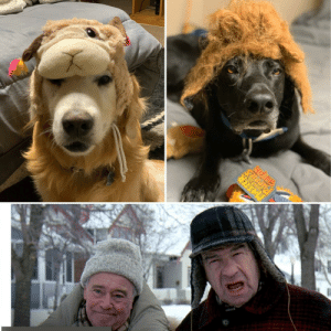 """We ordered """"lion manes"""" for Halloween online for our rescue kids and they were too small and they ended up looking like the guys from Grumpy Old Men!: PUeeIEs We ordered """"lion manes"""" for Halloween online for our rescue kids and they were too small and they ended up looking like the guys from Grumpy Old Men!"""
