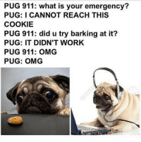 Funny, Lol, and Love: PUG 911: what is your emergency?  PUG: I CANNOT REACH THIS  COOKIE  PUG 911: did u try barking at it?  PUG: IT DIDN'T WORK  PUG 911: OMG  PUG: OMG I love pugs so freaking much. (I've been staring at pictures of them on Pinterest for the past thirty minutes) -Maddie🦉 funny cleanfunny humor cleanhumor comedy cleancomedy memes meme cleanmemes funnymemes lol cleanlol haha cleanhaha rofl cleanrofl noswearing cleanaccount 😂 😂😂