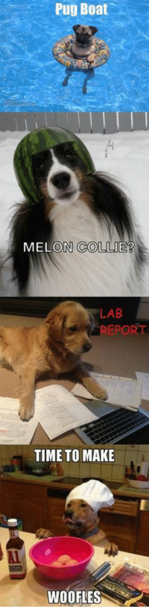 Dog Memes Of The Day 32 Pics – Ep37 #dogs #doglovers #lovelyanimalsworld - Lovely Animals World: Pug Boat  MELON COLLIE?  LAB  REPORT  TIME TO MAKE  WOOFLES Dog Memes Of The Day 32 Pics – Ep37 #dogs #doglovers #lovelyanimalsworld - Lovely Animals World