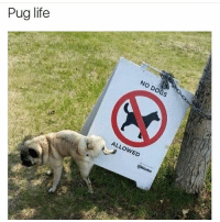 Dogs, Life, and Memes: Pug life  NO DOGS  ALLOWED Pug the police | check out @x__social_butterfly__x for more 🔥