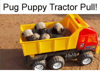 Memes, Pugs, and 🤖: Pug Puppy Tractor Pull! Pug Puppy Tractor Pull!  For more cut animal stuff, check out: Ebaum's World Animals