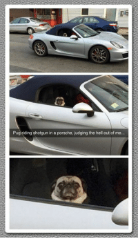 Memes, Porsche, and Hell: Pug riding shotgun in a porsche, judging the hell out of me.. They see me rollin'...