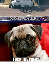 Lol what thepushdaily: PUG STARTS FIGHT WITH POLICE REAL  DOG DURING 4 HOUR STANDOFF STORY  FUCK THE POLICE Lol what thepushdaily