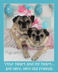 Family, Friends, and Love: Pugs and Kisses  Your heart and my heart...  are very, very old friends. Happy National Sibling Day!!!  My precious sister Maddie and I have been together....always <3 <3 <3 The first 10 years of our lives we lived in California and then...coming up on 3 years ago...(Wow time flies!!!) we moved to Maine to be with our new forever family. We are SO happy and have never looked back.  Though it all, it has been Maddie and me. We like to call each other soul mates <3 <3 <3. I protect her and keep her warm (I like to sit right on top of her :P) and Maddie grounds me with her kind, loving way. Where you see me...you will see us <3 <3 <3 We understand and love each other so completely and have never had a cross word.  I love you to the stars Maddie Moo. Thank you for always being there for me and loving me unconditionally. I don't know what I would do without you. You are my everything <3 <3 <3  ~ Zoe Elizabeth