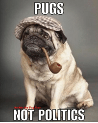 "With all this political stuff that's going on everywhere at the moment, we say ""Pugs Not Politics"" 😀😀😀 it's not me in the photo, just a cool pug picture that we created into a meme....😄😄😄: PUGS  e Pug Star  NOT POLITICS With all this political stuff that's going on everywhere at the moment, we say ""Pugs Not Politics"" 😀😀😀 it's not me in the photo, just a cool pug picture that we created into a meme....😄😄😄"