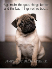 We end our Pug Sunday with this sweet message ❤: Pugs make the good things better  and the bad things not so bad  SIMPLY BY BEING THERE. We end our Pug Sunday with this sweet message ❤