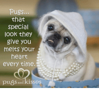Coming in under the wire for National Pug Day!!! We had computer problems all day and they just resolved so here we are <3 <3 <3. Power to the pugs!!!!! <3 <3 <3 #forevergrettarose: pugs  that  Special  LOOK they  give you  melts your  heart  every time.  pués, and kisses Coming in under the wire for National Pug Day!!! We had computer problems all day and they just resolved so here we are <3 <3 <3. Power to the pugs!!!!! <3 <3 <3 #forevergrettarose