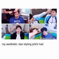 Memes, Aesthetic, and Hair: PUGS  WhiskeryHowlter-IG  my aesthetic: dan styling phil's hair i need more accounts to follow, so tag your favorite one below and i'll check them out :)