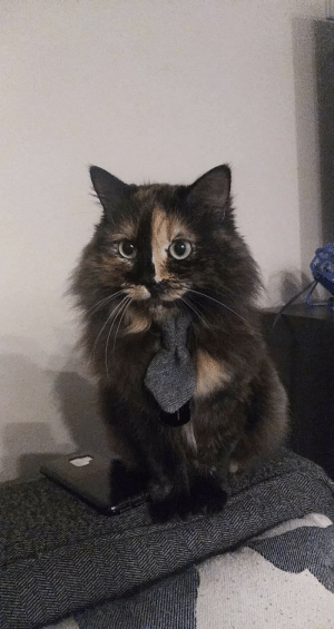 Pumpkin looks rather dashing with a tie. Thought you all should see as well: Pumpkin looks rather dashing with a tie. Thought you all should see as well