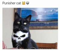 Memes, Punisher, and 🤖: Punisher cat ?  @cuter
