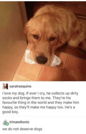 Pupper always tries his best to cheer up his human :): Pupper always tries his best to cheer up his human :)