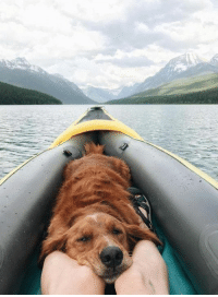 Pupper Canoe Have you taken any trips with your furry friend this summer?  credit i.redd.it: Pupper Canoe Have you taken any trips with your furry friend this summer?  credit i.redd.it