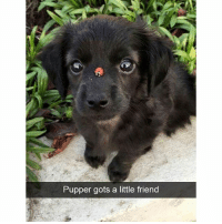 Cute dog snapchats that will make your day better: Pupper gots a little friend Cute dog snapchats that will make your day better