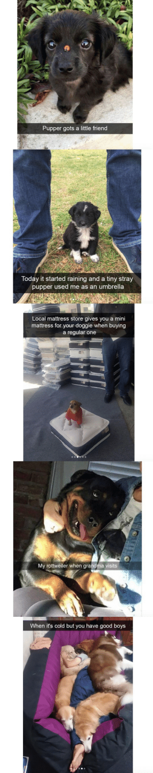 babyanimalgifs:  Cute dog snapchats that will make your day better: Pupper gots a little friend   Today it started raining and a tiny stray  pupper used me as an umbrella   Local mattress store gives you a mini  mattress for your doggie when buying  a regular one   My rottweiler when grandma visits   When it's cold but you have good boys babyanimalgifs:  Cute dog snapchats that will make your day better