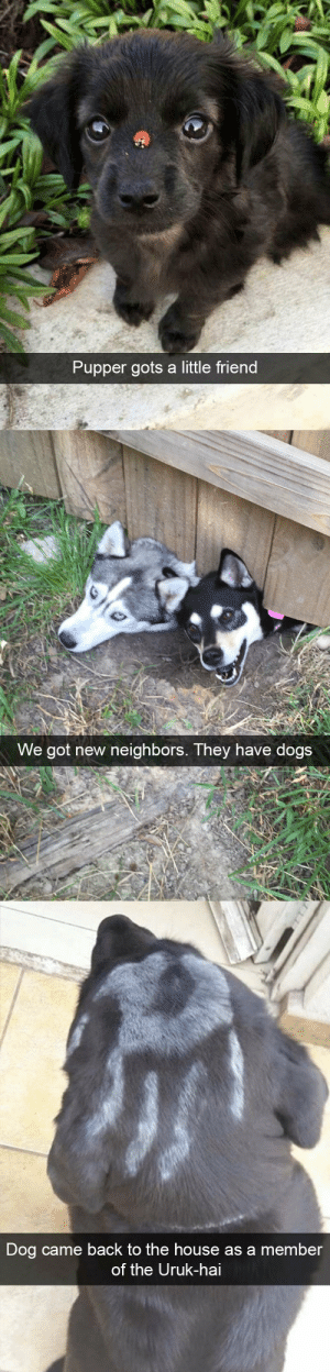 animalsnaps:Animal snaps: Pupper gots a little friend   We got new neighbors. They have dogs   Dog came back to the house as a member  of the Uruk-hai animalsnaps:Animal snaps