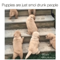 This actually looks like every college campus right now. Via @bark Pups @layalolson: Puppies are just smol drunk people  @bark  @layalolson This actually looks like every college campus right now. Via @bark Pups @layalolson