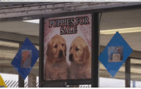 Love, Memes, and Puppies: PUPPIES FOR  SALE You're disgusting you'll never find love https://t.co/RrxhAb5Vjn