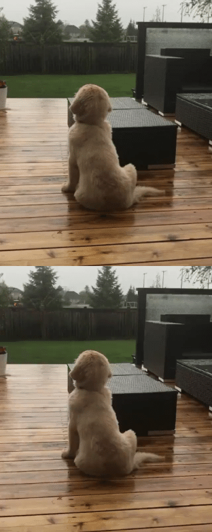 Puppos first time seeing the sky leaking (via: @lifeofsterlingnewton): Puppos first time seeing the sky leaking (via: @lifeofsterlingnewton)