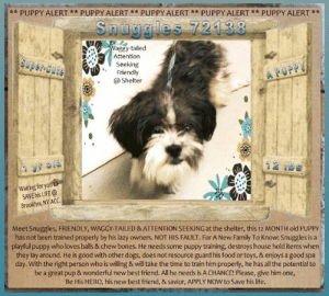 Being Alone, Best Friend, and Bones: ** PUPPY ALERT** PUPPY ALERT * PUPPY ALERT** PUPPY ALERT** PUPPY ALERT **  Snuggles 72138  Waggy-tailed  Attention  Seeking  Friendly  @Shelter  Swper-Cute  A PUPPY  1yr old  12 bs  Waiting for you to  SAVE his LIFE@  Brooklyn, NY ACC  Meet Snuggles, FRIENDLY, WAGGY-TAILED & ATTENTION SEEKING at the shelter, this 12 MONTH old PUPPY  has not been trained properly by his lazy owners. NOT HIS FAULT. For A New Family To Know: Snuggles is a  playful puppy who loves balls & chew bones. He needs some puppy training, destroys house hold items when  they lay around. He is good with other dogs, does not resource guard his food or toys, & enjoys a good spa  day. With the right person who is willing & will take the time to train him properly, he has all the potential to  be a great pup & wonderful new best friend. All he needs is A CHANCE! Please, give him one,  Be His HERO, his new best friend, & savior, APPLY Now to Save his life. **FOSTER or ADOPTER NEEDED ASAP** Meet Snuggles, FRIENDLY, WAGGY-TAILED & ATTENTION SEEKING at the shelter, this 12 MONTH old PUPPY has not been trained properly by his lazy owners. NOT HIS FAULT. For A New Family To Know: Snuggles is a playful puppy who loves balls & chew bones. He needs some puppy training, destroys house hold items when they lay around. He is good with other dogs, does not resource guard his food or toys, & enjoys a good spa day. With the right person who is willing & will take the time to train him properly, he has all the potential to be a great pup & wonderful new best friend. All he needs is A CHANCE! Please, give him one, Be His HERO, his new best friend, & savior, APPLY NOW to Save his life. ** HURRY ** He is about OUT OF TIME!!! :(  ✔Pledge✔Tag✔Share✔FOSTER✔ADOPT✔Save a life!  ******************************************** *** TO FOSTER OR ADOPT ***   To FOSTER or ADOPT, To SAVE his LIFE, SPEAK UP NOW & apply with rescues OR message Must Love Dogs - Saving NYC Dogs OR email MustLoveDogsNY