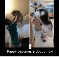 Doggying: Puppy becomes a doggy now