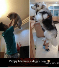 Doggying: Puppy becomes a doggy now  World