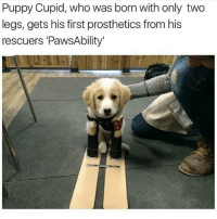 Anaconda, Funny, and Cupid: Puppy Cupid, who was born with only two  legs, gets his first prosthetics from his  rescuers 'PawsAbility' 👉 Slide right to see the FREE bamboo Wayfarers 😎😎 Norwegian brand Nordic Rays just dropped a collection of sustainably sourced, handcrafted bamboo shades, so go check them out and cop a pair 🔥🔥🔥 The Wayfarers are now at 100% off for a short time only, just pay shipping -> link in bio 🌴 PS: Bulk shipping discount on multiple claims.