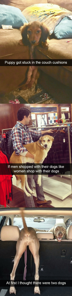 animalsnaps:Dog snaps: Puppy got stuck in the couch cushions   POLO RALPH LAUPEN  If men shopped with their dogs like  women shop with their dogs   At first thought there were two dogs animalsnaps:Dog snaps