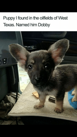 Animals, Dogs, and Memes: Puppy I found in the oilfields of West  Texas. Named him Dobby  В 27 Dog Memes That Will Brighten Up Your Day - Lovely Animals World #dogs  #dogmemes #memes #lovelyanimalsworld