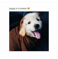 Puppies, Girl, and Puppy: puppy in a onesie