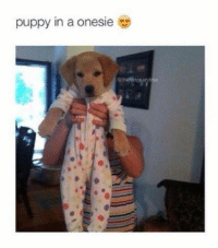 Memes, Puppies, and Puppy: puppy in a onesie