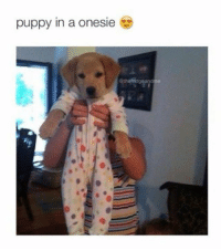 Dank, Puppies, and Puppy: puppy in a onesie Adorable...