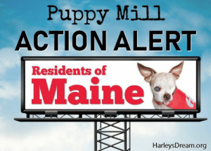 "Dogs, Friends, and Memes: Puppy Mill  ACTION ALERT  Residents of  Maine  HarleysDream.org URGENT ACTION ALERT! Attn: Maine residents  Calling on all Maine residents who are friends of Harley to please pick up the phone and call Governor Mill's office and urge her to sign ""The Humane Pet Shop Bill - LD 1311"". This important bill will keep any additional pet stores from selling dogs from puppy mills.  You can reach Gov. Mills by calling (207) 287-3531. Please call today and thank you! SHARE!  #HarleysDream #ENDpuppymills"