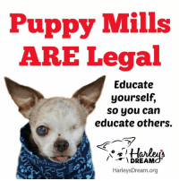Dogs, Life, and Memes: Puppy Mills  ARE Legal  Educate  yourself,  so you can  educate others.  Lu  DREAM  HarleysDream.org Puppy mills ARE legal.  The fact is, commercial dog breeding is considered legal business in the United States and has been for many decades. The current legal standards for care, housing and treatment in commercial breeding kennels are outlined in the Animal Welfare Act (AWA), which was signed into law in 1966. Although there have been amendments passed over the years and individual states may implement further regulations, the provisions remain grossly inadequate in providing basic, humane care for breeding dogs. Despite that we know this to be true, we have no legal authority over any aspect of the industry.  In addition to the federal law, some states have laws that regulate the commercial breeding industry as well. However, in most cases, the standards that breeders are required to meet by law are extremely minimal. Conditions that most people would consider inhumane, or even cruel, are often totally legal.  Under the federal Animal Welfare Act, the following is completely legal:  * A dog may live in a small cage 24/7 for its entire life and only be taken from the cage to be bred.  * The cage only needs to be six inches larger than the dog (top and sides) – this does not include the tail.  * Painful, wire flooring is acceptable – and most common.  * Cages can be stacked one on top of another and the dogs relieve themselves in their cages.  * Hundreds, and even thousands of dogs can be kept on the breeder's premises. There is no limit.  * There is no limit to how many people should care for the dogs.  * One or two people can care for as many as 1,000 dogs.  * Unwanted dogs may be killed by the breeder – they do not have to be turned over to rescue or shelters.  * Interaction with humans is not required.