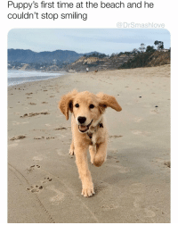 Bless Up, Lmao, and Memes: Puppy's first time at the beach and he  couldn't stop smiling  @DrSmashlove HAS ANYONE EVER TRIED TO EAT CLEAN AND HEALTHY AND THEN SOME A$$HOLE PRESENT U WITH PIZZA AND U CASUALLY EAT THE WHOLE THING LIKE DAMN, U KNEW I WAS TRYINA BE A CLEAN EATER U FOUL FOR THAT IT WAS GOOD THO - VERY GOOD - AYEEE U WANNA HAVE PIZZA TMROW OR SOME? LIKE MAKE IT 2 for 2 orrrrr? LMAO BLESS UP 😍😂😂