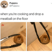 Memes, 🤖, and Cooking: Puppzu  @Puppzu  when you're cooking and drop a  meatball on the floor oooops