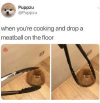 Memes, Mood, and Pics: Puppzu  @Puppzu  when you're cooking and drop a  meatball on the floor 37 Great Pics And Memes to Improve Your Mood