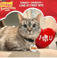 Tag a friend if you agree with this statement – it was love at first BITE! Not sure about you, but I am celebrating Valentine's Day with a tasty meal @Friskies Tender & Crunchy loveatfirstbite ad: PURINA  Friskies  der Crunch  Combo  TENDER CRUNCHY  LOVE AT FIRST BITE  Friskies Tag a friend if you agree with this statement – it was love at first BITE! Not sure about you, but I am celebrating Valentine's Day with a tasty meal @Friskies Tender & Crunchy loveatfirstbite ad