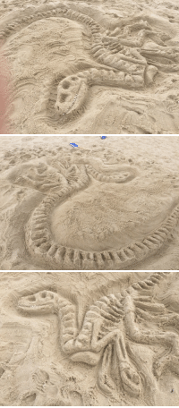 Tumblr, Beach, and Blog: purple-raptor:My friend and I made a raptor skeleton out of sand at the beach :