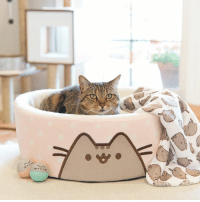 Pusheen cat products are now available online at Petco! This exclusive collection is only available online, with awesome goodies ranging from beds & blankets to teaser toys & collars! http://bit.ly/2tSAR1s: Pusheen cat products are now available online at Petco! This exclusive collection is only available online, with awesome goodies ranging from beds & blankets to teaser toys & collars! http://bit.ly/2tSAR1s