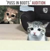 """Pusse: """"PUSS IN BOOTS"""" AUDITION"""