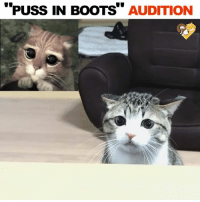 I think he gets the job! 😂: PUSS IN BOOTS  AUDITION I think he gets the job! 😂