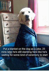 27 Funny Animal Pictures Of The Day: Put a blanket on the dog as a joke, 25  mins later he's still standing here like he's  waiting for some kind of ceremony to start 27 Funny Animal Pictures Of The Day