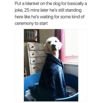Follow me @hilarious.ted for more animal memes (tw-jessvallace1): Put a blanket on the dog for basically a  joke, 25 mins later he's still standing  here like he's waiting for some kind of  ceremony to start Follow me @hilarious.ted for more animal memes (tw-jessvallace1)