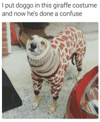 Memes, Giraffe, and 🤖: put doggo in this giraffe costume  and now he's done a confuse @sarcastic_tendencies posts hilarious memes 🔥 follow follow follow